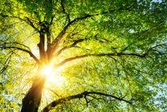 O sol que brilha através dos ramos de uma árvore imagens de stock