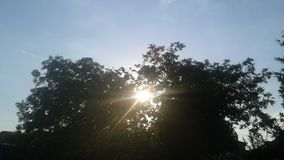 O sol quebra através dos ramos da árvore fotos de stock