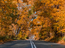O sol, queda, madeira, estrada e a casa Foto de Stock