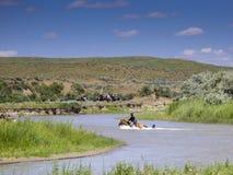 O soldado da cavalaria dos E.U. aferra-se à cauda dos cavalos no rio Fotografia de Stock Royalty Free
