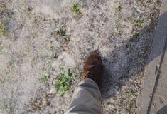 O solo é coberto com o fluff do álamo fotografia de stock