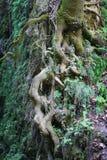 O solo aparece raizes da árvore fotos de stock