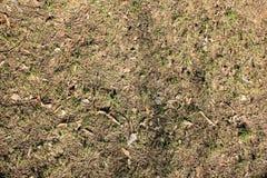 O solo na floresta imagens de stock