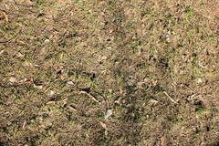 O solo na floresta imagem de stock