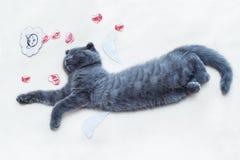 O sonho do amante do gato Imagem de Stock Royalty Free