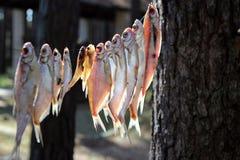 O sonho do pescador Imagens de Stock