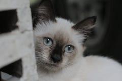 O sono branco bonito do gato confundiu tão bonito ao sul de Thailan Fotos de Stock