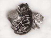 O sono de dois gatinhos, abraçando-se Os gatinhos são friends_ Foto de Stock