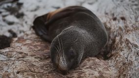 O sono e encontro no selo das rochas vídeos de arquivo