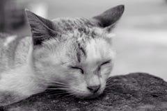 O sono, o preto & o branco do gato Imagem de Stock Royalty Free