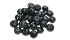 O speciosa do Livistona é frutos maduros é abundante no selvagem fotografia de stock royalty free
