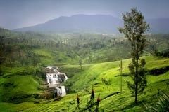 O St Clair cai em Sri Lanka Fotos de Stock