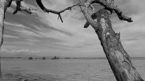 O steadicam da suspensão Cardan disparou de uma árvore seca, inoperante com ramos abstratos contra um céu Tronco de árvore se video estoque