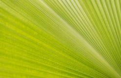 O sumário alinha a textura verde da folha imagem de stock
