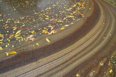 O sumário da poeira e seca as folhas na inundação da água Foto de Stock