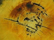 O sumário, idade, envelheceu, rachou-se, texture, soa, anéis, quebra, anéis de madeira Fotografia de Stock Royalty Free
