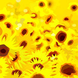 O sumário pintou um campo de girassóis das flores do amarelo Imagem de Stock Royalty Free