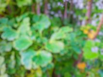 O sumário sae do fundo, folhas borradas do verde como um fundo Imagens de Stock Royalty Free