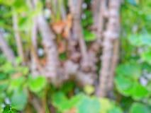 O sumário sae do fundo, folhas borradas do verde como um fundo Imagens de Stock