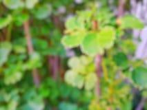 O sumário sae do fundo, folhas borradas do verde como um fundo Imagem de Stock