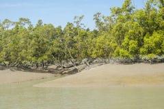O Sundarbans Foto de Stock Royalty Free