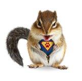 O super-herói animal engraçado, esquilo desafivela sua pele Foto de Stock