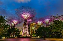 O Supertree em jardins pela baía Fotos de Stock