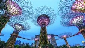 O Supertree em jardins pela baía Imagens de Stock Royalty Free