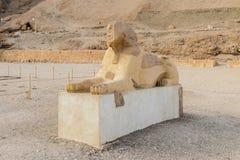 O suporte da esfinge na entrada do grande templo da rainha Hatshepsut em Luxor imagem de stock royalty free