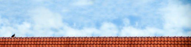 o suporte do pombo no branco do telhado e do céu azul nubla-se Fotografia de Stock