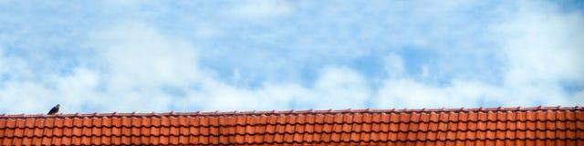 o suporte do pombo no branco do telhado e do céu azul nubla-se Imagem de Stock Royalty Free