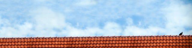 o suporte do pombo no branco do telhado e do céu azul nubla-se Fotografia de Stock Royalty Free