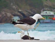 O suporte na areia, Prainhas da gaivota faz a praia de Pontal, Arraial faz Cabo fotografia de stock