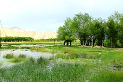 O swampland de tibet foto de stock
