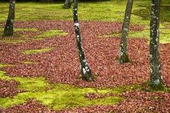 O término do outono mas o inverno agradável é vindo foto de stock