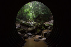 O túnel à floresta Imagens de Stock Royalty Free
