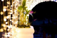 O túnel da luz em Nabana nenhum jardim de Sato na noite no inverno, Ásia, famosa imagens de stock