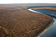 O taiga do larício Siberian e o rio caem de um helicóptero foto de stock