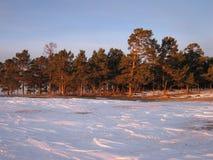 O taiga Siberian Fotos de Stock