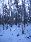O taiga Siberian Imagens de Stock