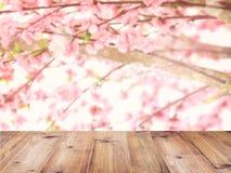 O tampo da mesa sobre as flores de cerejeira cor-de-rosa floresce na flor completa imagens de stock royalty free