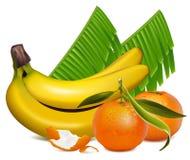 O tangerine fresco frutifica com folhas e o bana verdes Foto de Stock