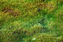 O tapete do musgo formou no ártico nos limites os mais northernmost de vida imagem de stock