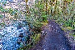 O Taranaki cai caminho - parque nacional de Tongariro imagens de stock