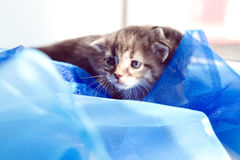 O tecido do gatinho encontra-se no sol Imagem de Stock Royalty Free