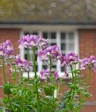 O telhado pequeno do jardim floresce a casa de campo Foto de Stock Royalty Free