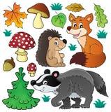 O tema dos animais selvagens da floresta ajustou 1 Imagem de Stock