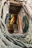 O templo da árvore de Banyan Imagem de Stock Royalty Free