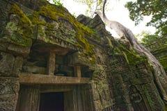 O templo de Ta Prohm arruina Camboja Siem Reap imagem de stock