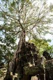 O templo de Ta Prohm em Cambodia Fotografia de Stock